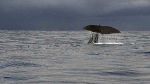 Исследование: «киты» не влияли на цену биткоина в 2018 году