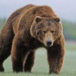 Курс биткоина: «Медведи» готовятся завладеть рынком